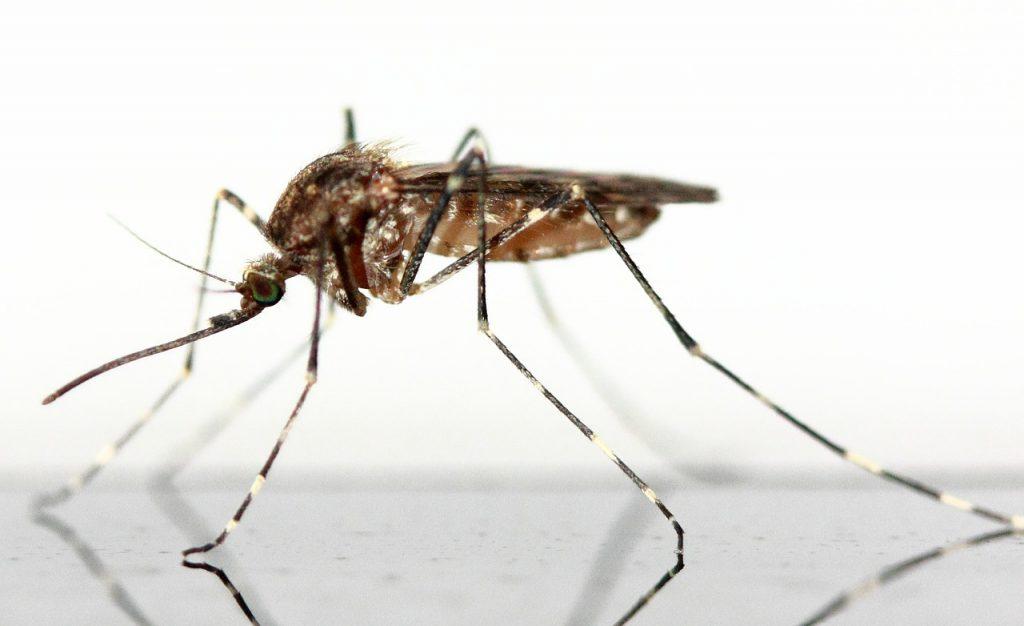 come distinguere puntura di zanzara