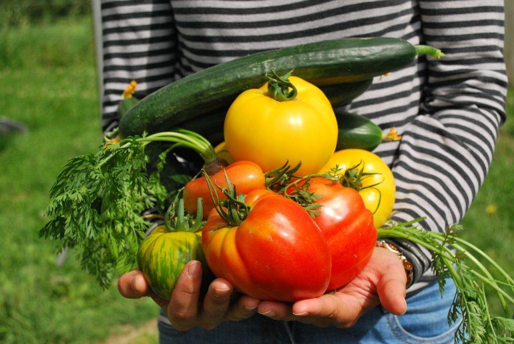 verdure orto in affitto