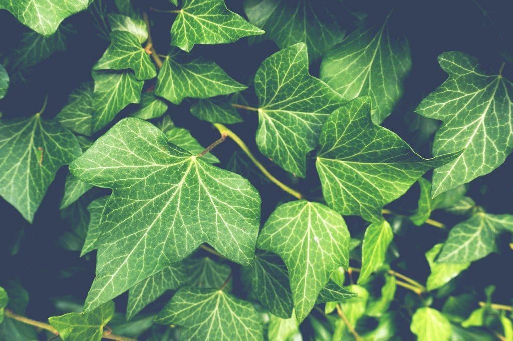 scelta delle piante da giardino