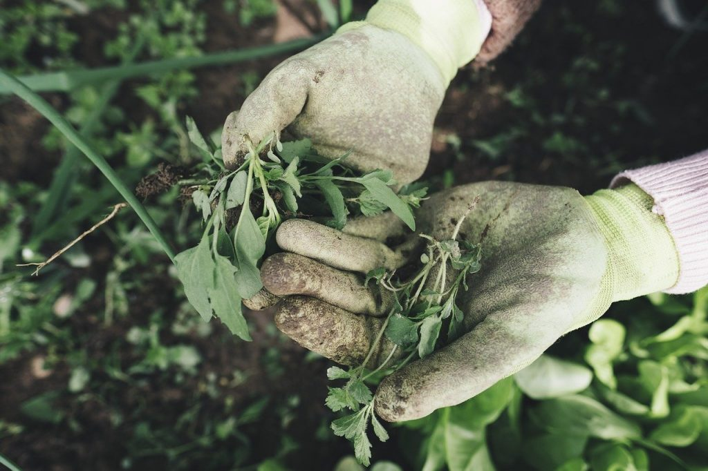 giardinaggio preparazione terreno