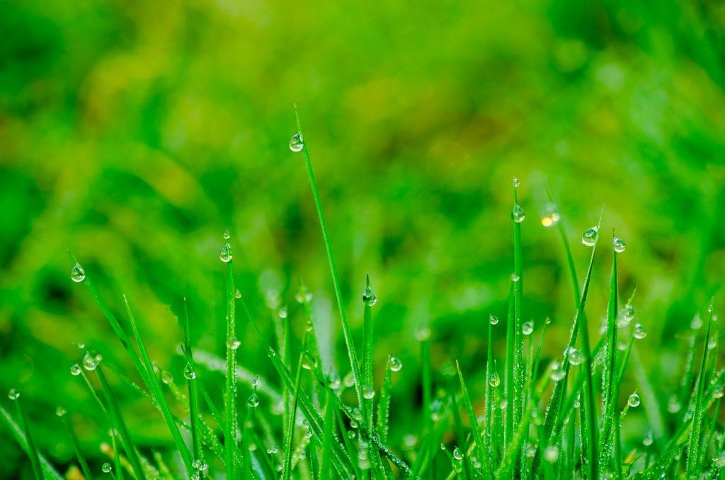 erba alta in giardino