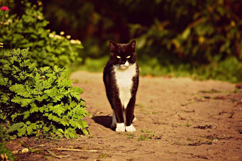 gatto bianco e nero in giardino
