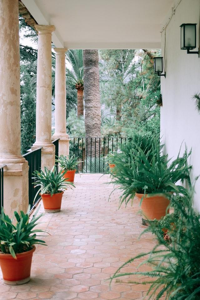 Terrazza con piante verdi in vaso
