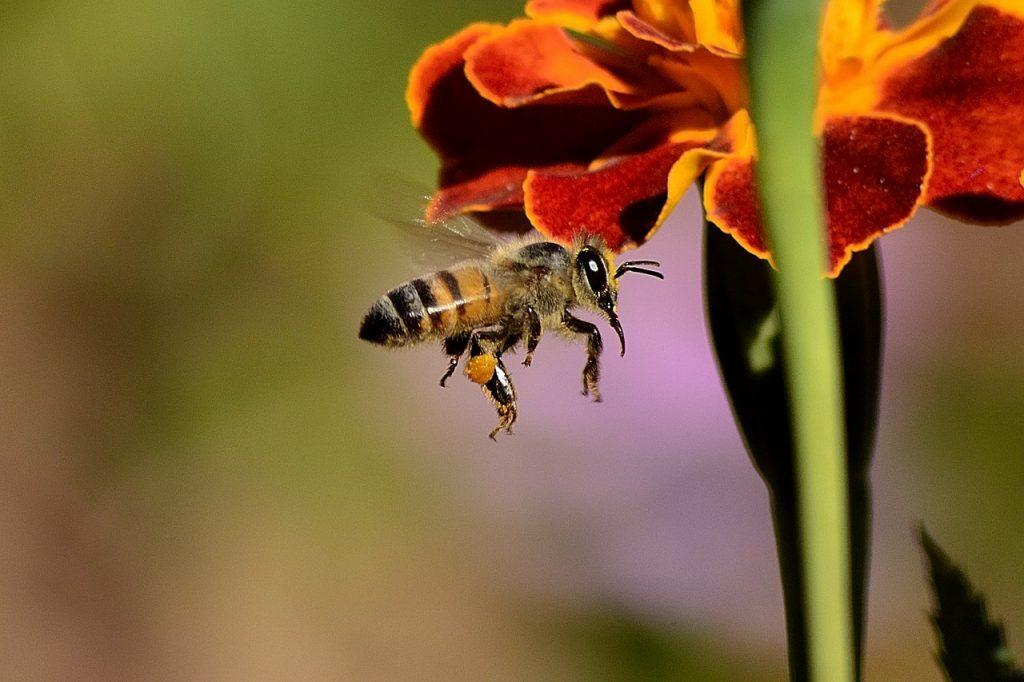 api sui fiori