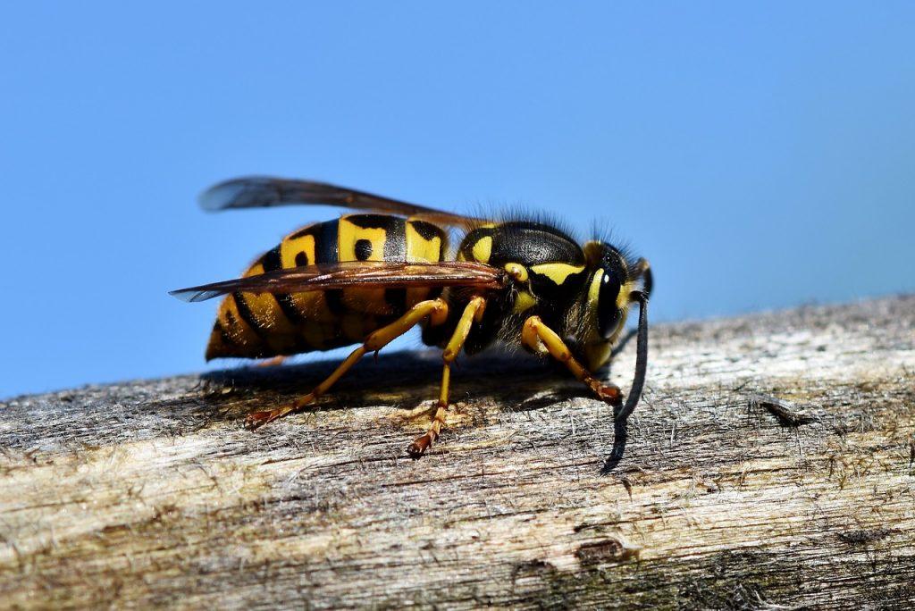 Come allontanare le vespe dal terrazzo