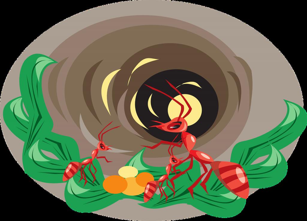 nido formiche